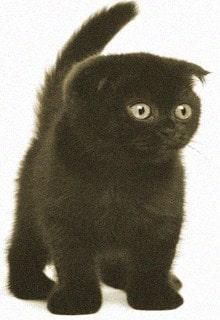 котенок Джеки