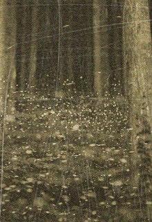 свечение в лесу