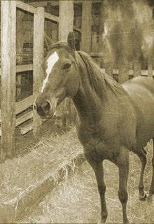 лошадь на конюшне