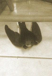 птица на полу