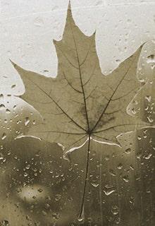 осенний лист на стекле