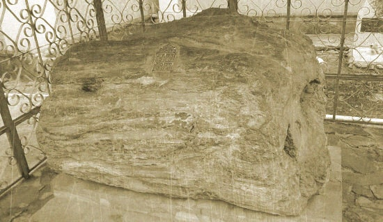 окаменевшее дерево