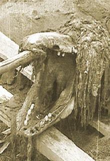 Сахалинский монстр
