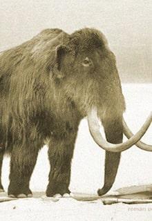живой мамонт