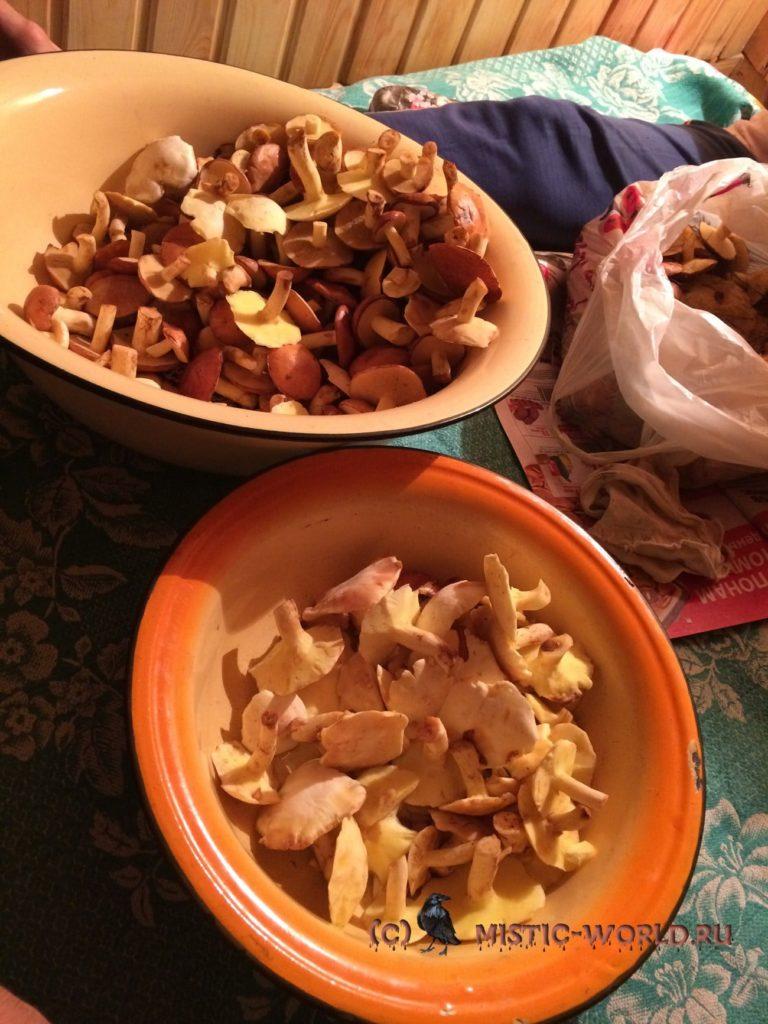 фотография грибов
