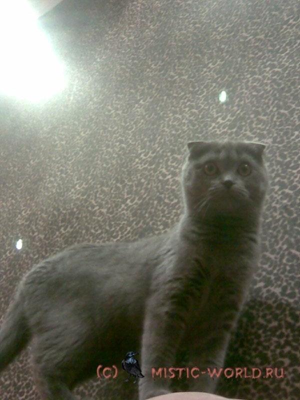 светящаяся капля над кошкой