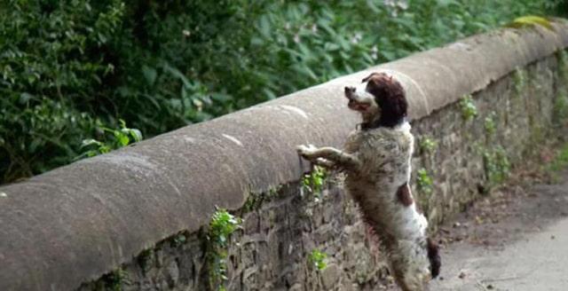 собака на мосту